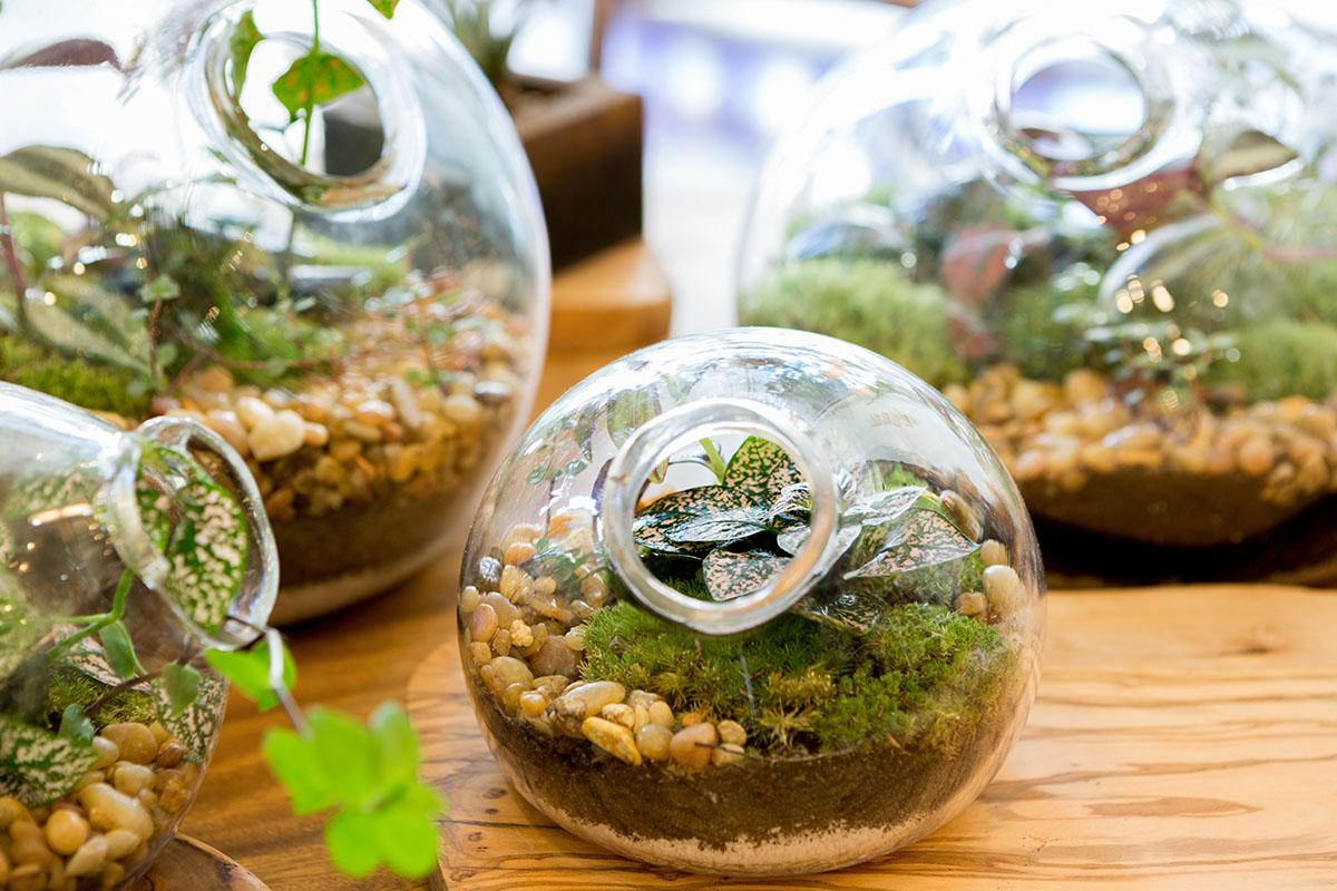 May 30 2018 Make Your Own Garden Terrarium Callingwood Marketplace
